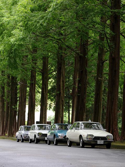 無事、会場に到着~!この並木道はホント気持ち良いねぇ~!早速、並べて「パシャ!」